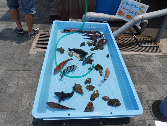Saiki, Japonia: 前で販売の魚