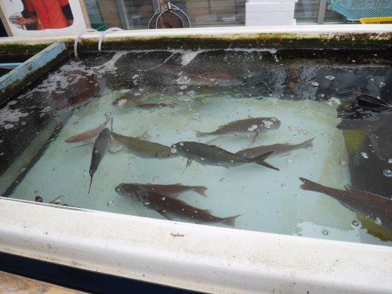 Saiki, Japan: 前で販売の魚