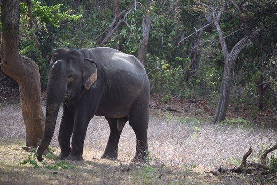 Tissamaharama, Sri Lanka: photo2.jpg