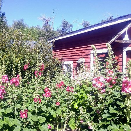 Four Mile Creek Bed and Breakfast: IMG_20170715_102957_870_large.jpg
