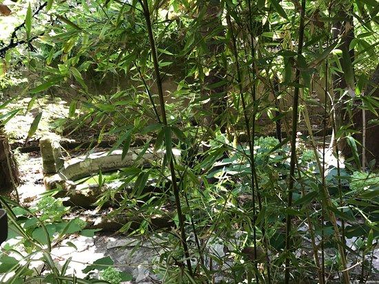 Bild von jardin mazarin aix en provence for Jardin mazarin