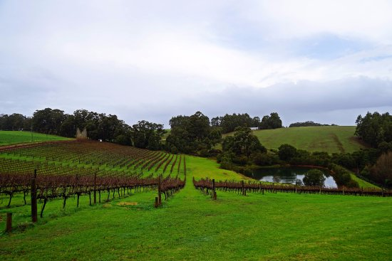 Pemberton, أستراليا: vineyard