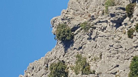 Pileta Caves (Cueva de la Pileta) (Benaojan, Spain): Top Tips Before You Go w...