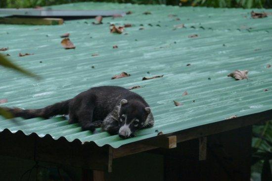 Lookout Inn Lodge: It's a hard life.