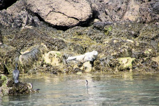 Beaumaris, UK: Seal