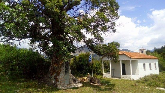 Tree Chapel Saint Paissiou