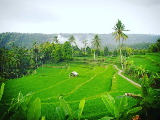 Lovina Beach, Indonésia: Mayong rice terrace