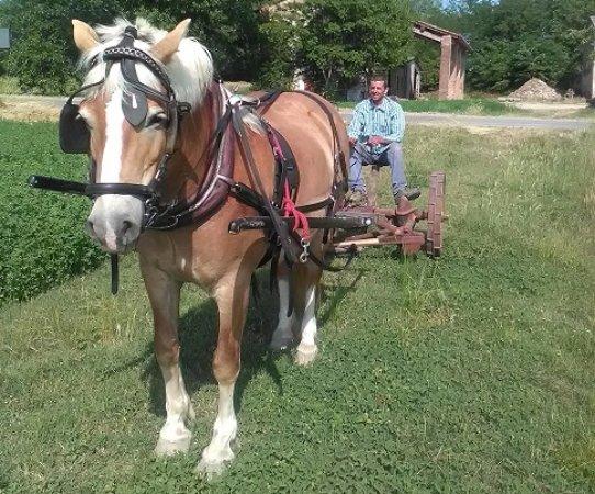 Alseno, Italy: sfalcio dell'erba con col cavallo