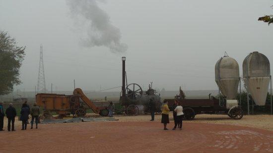 Alseno, Italy: mietitura del granoturco con macchina a vapore