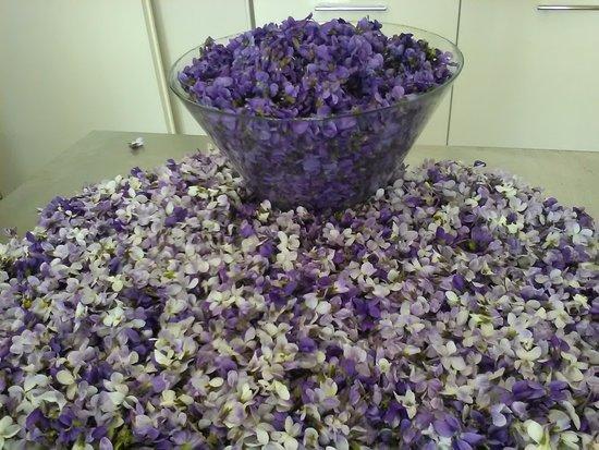 Alseno, Italy: la materia prima delle crespelle alle violette