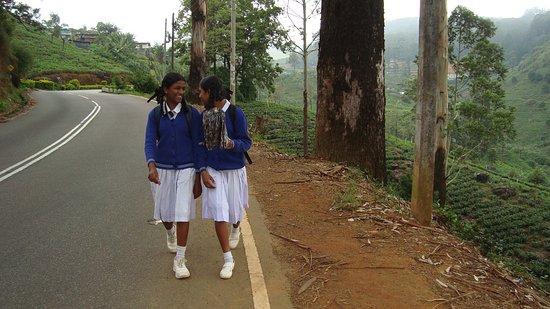 Sri Lanka by Blue Lanka Tours, high-school girls in the tea plantations