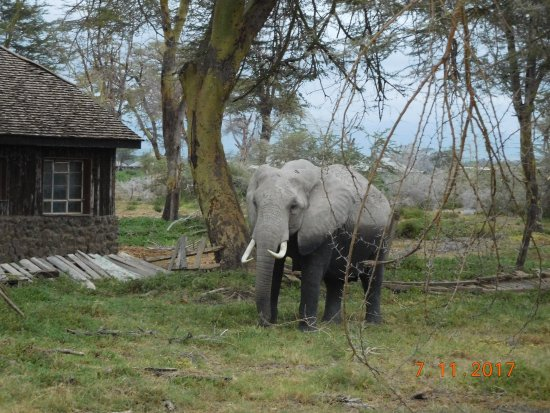 Amboseli National Park, Kenya: elephant
