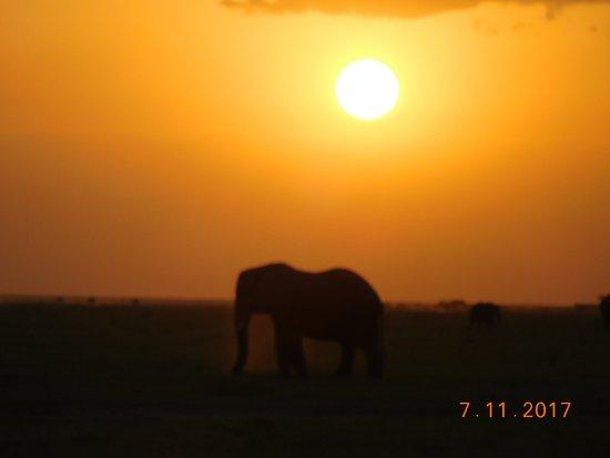 Amboseli National Park, Kenya: sunset