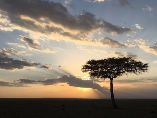 Tipilikwani Mara Camp - Masai Mara: That sunset, acacia and savanna thing is true!