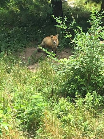 Maine Wildlife Park: photo6.jpg