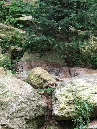 Maine Wildlife Park: photo8.jpg