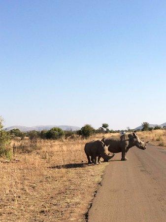 Pilanesberg National Park, Republika Południowej Afryki: Road Block