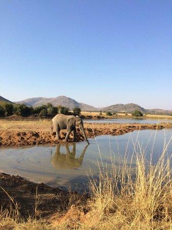 Pilanesberg National Park, Republika Południowej Afryki: Elephant