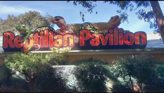 Μπλακτάουν, Αυστραλία: Featherdale Wildlife Park, is great for the kids, they can hand feed the kangaroos and wallabies