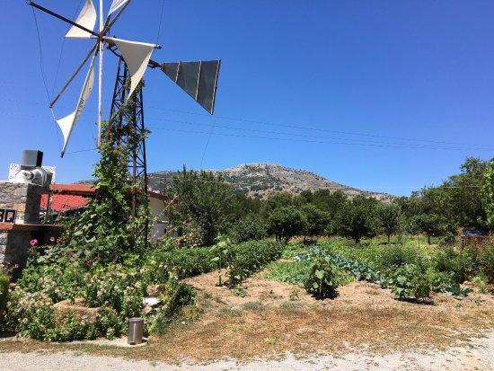 Malia, Grecia: photo0.jpg