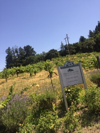 The Hess Collection Winery & Art Museum: photo1.jpg