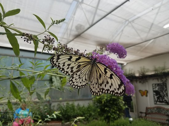 Butterfly House: 20170627_121415_large.jpg