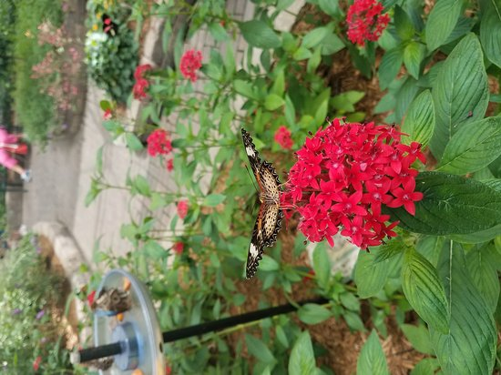 Butterfly House: 20170627_120619_large.jpg