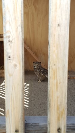 Wilson, Вайоминг: One of the owls we got to meet