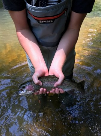 Rosman, NC: Fly Fishing with Headwater Outfitters - Amazing experience!