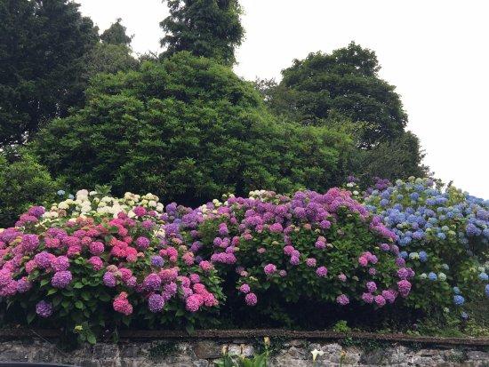 Recess, Irlanda: Flowers everywhere