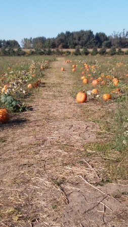Saint Johns, Μίσιγκαν: Pumpkin patch