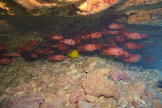 Blue Wilderness Dive Adventures: photo5.jpg