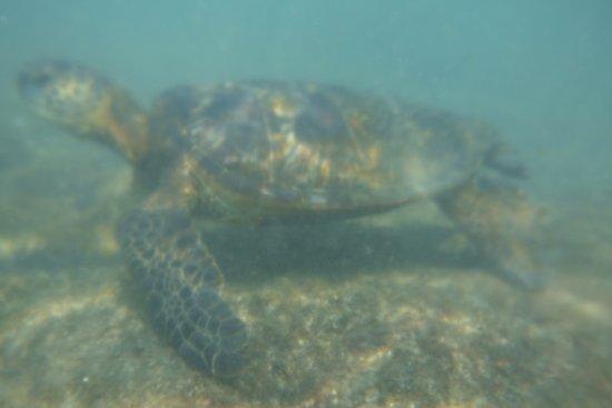 Вайколоа, Гавайи: photo7.jpg