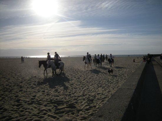 Deauville Beach: Horses on the beach