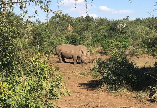 Hluhluwe, South Africa: photo0.jpg