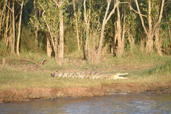 St Lucia, Sudáfrica: Crocodile seen from the boat on the river boat cruise...