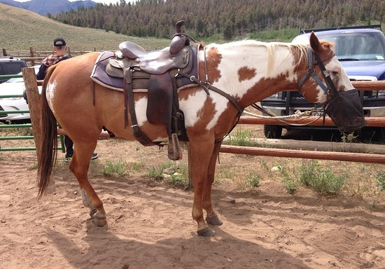 Salida, Kolorado: Fred was muzzled to keep him from stopping for a grassy snack.