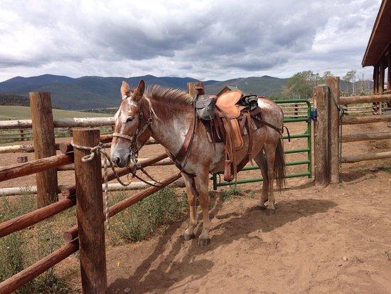 Salida, CO: Mavis the mule was a bit mule headed. She was ridden by our guide Travis.