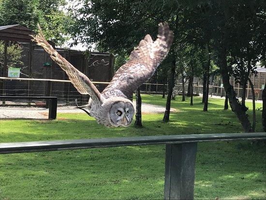 Screech Owl Sanctuary: photo6.jpg
