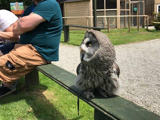 Screech Owl Sanctuary: photo7.jpg