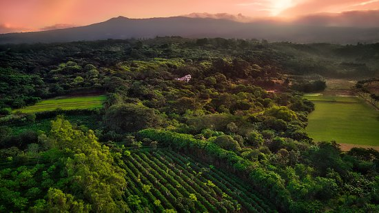 Finca Rosa Blanca Coffee Plantation & Inn: Aerial view of the coffee plantation and resort