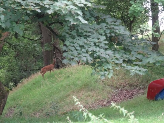 Hoghton, UK: Deer on the bank