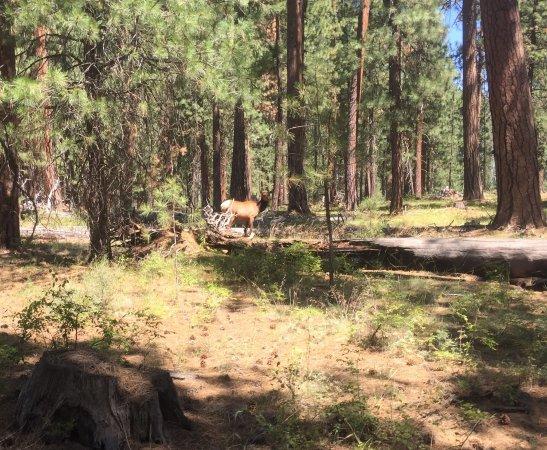 Camp Sherman, OR: photo6.jpg