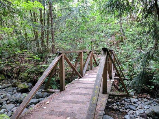 Dosewallips State Park: Steam Donkey Loop Trail