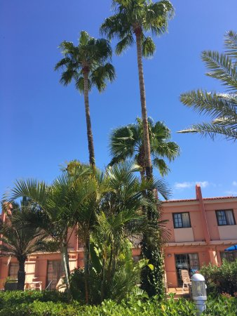 Picture of jardin del sol apartments playa for Bungalows jardin del sol gran canaria