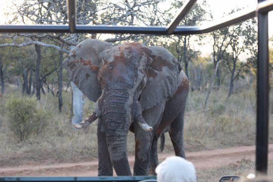 Welgevonden Game Reserve, South Africa: Safari experience at 57 Waterberg