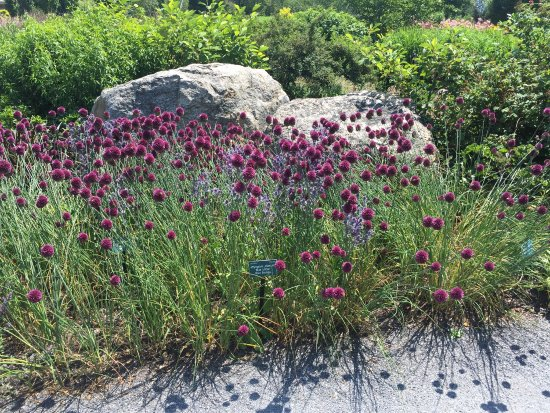 Coastal Maine Botanical Gardens: photo1.jpg
