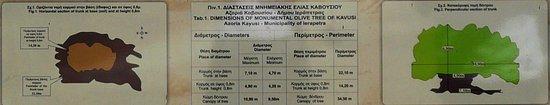 Kavousi, اليونان: Explications sur l'âge de l'olivier
