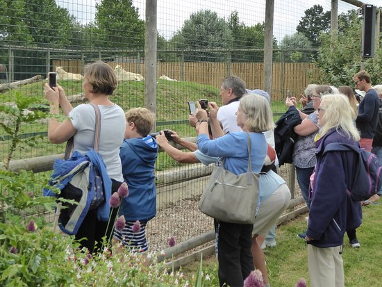 Smarden, UK: Open Day at the sanctuary-- enjoyable for all ages