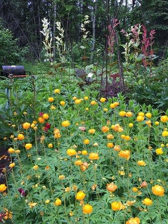 Herbs And Annuals In Creative Boxes Fotograf A De Alaska
